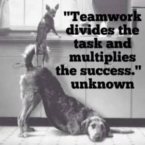 4 Legged Teamwork