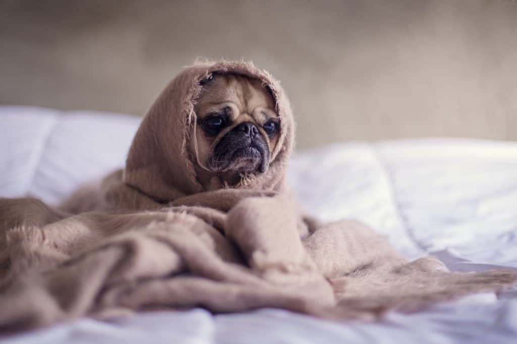 7 Tips to boost your immune system so you stay happier than this pup all winter!
